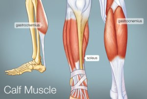 Calf Muscles